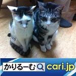 0_cat191129w500x500.jpg