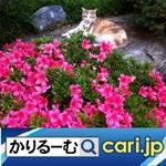 5_catflower191204w500x500.jpg