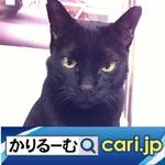 48_cat20210309w500x500 .jpg
