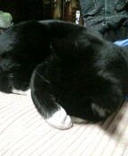 サブ 顔を覆って寝てる090121_010424.JPG