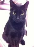 黒猫クロ 20120124154333de4.jpg