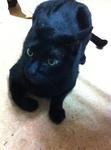 猫 クロ IMG_6326.jpg
