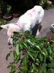 犬 サクラ IMG_1042.jpg