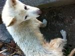 犬サクラ 20120112154619e19.jpg