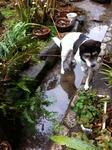 犬モモ 20120121120801634.jpg