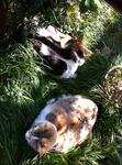 犬モモ 猫ユリ IMG_6174.jpg
