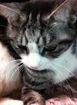 猫 スズ 201201151509138ec.jpg