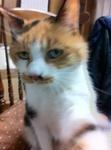 猫 ミミ IMG_4350.jpg