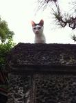 猫 ハナ IMG_0436.jpg