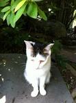 猫 ハナ IMG_6091.jpg