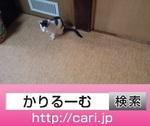 IMG_20160831_1653213.jpg