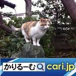 1_cat191129w500x500.jpg