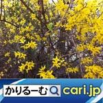 2_flower191129w500x500.jpg