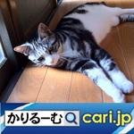28_96k_cat200707.jpg