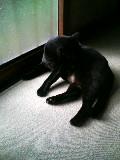 猫 縁側 クロ 101023_100018.JPG