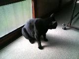 猫 縁側 クロ [動物、写真] 101023_095916.JPG