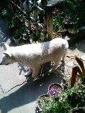 白犬 サクラ 庭 110329_134346.JPG