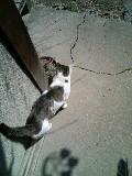 猫 ハナ 110329_134253.JPG