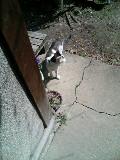 猫 ハナ 110329_134331.JPG