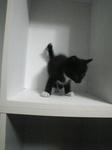 サブ 黒白子猫 Image102.jpg