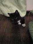 黒白猫 サブ カーテンの下から Image166.jpg