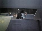 黒白猫 サブ 車の後部 目が光っている Image181.jpg