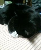 黒白猫 サブ 寝てる 090121_010440.JPG