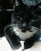 黒白猫 サブ 090121_010357.JPG