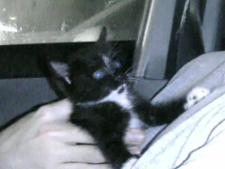 黒白猫 サブ 車の中 090130_183022.JPG