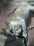 子猫 ゆり 110823_211943.JPG