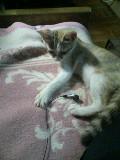 子猫 ゆり 110823_211911.JPG