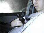 黒白子猫 サブ 車の中 Image099.jpg