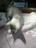 子猫 ゆり 110823_211743.JPG