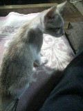 子猫 ゆり 110823_211857.JPG