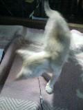 子猫 ゆり 110823_211801.JPG