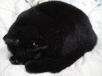 黒猫 愛知県名古屋市西区上小田井(南川町)付近で保護  111110_190750.JPG