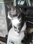猫 スズ 炊飯器の上 110907_050146.JPG