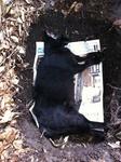 黒猫 クロ 埋葬 120919 IMG_7052.jpg