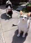 犬モモ 猫ユリ IMG_0907.jpg